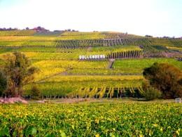 La France 1e producteur mondial de vin en 2014. #vin#france