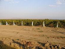 Crimée: une société suédoise va planter 1000ha de vignes. #russie#vin