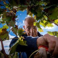 Santa Maria la Nave, vins du Etna  #Italie #Sicile #Etna