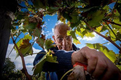 Santa Maria la Nave, vins du Etna  #Italie #Sicile#Etna