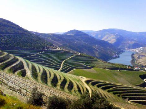 Plus de 150 groupes de la société civile appellent à une réforme des politiques agricoleseuropéennes