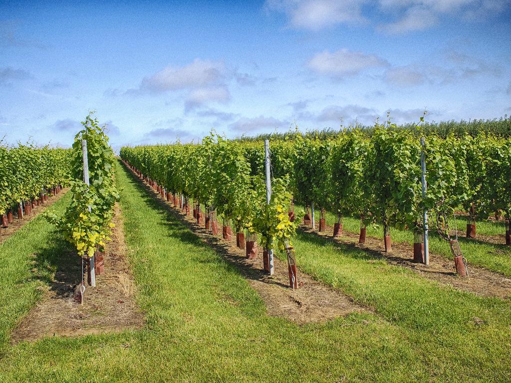 L'UE approuve pour la première fois une appellation d'origine protégée transfrontalière pour un vin