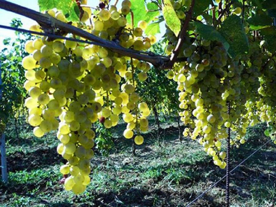 Nouvelle appellation d'origine protégée pour un vin de Hongrie